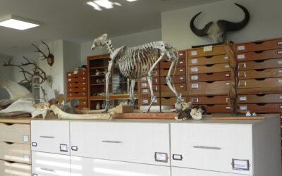 Collection d'anatomie comparée animale