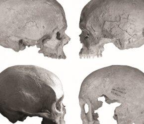 Relations entre les groupes humains préhistoriques : des fossiles datés du Gravettien montrent une étonnante homogénéité morphologique