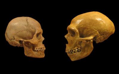Podcast : Homo sapiens, plus futé que ses ancêtres ?